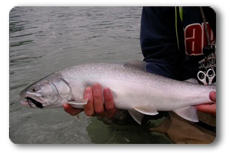 Best Steelhead and Trout Fishing Fishing with BC Sportfishing Group